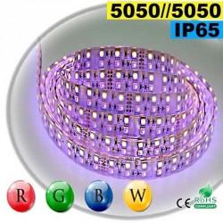 Strip LEDs large RGB-WW de 20mm IP65 - Double assemblage de LEDs 5050 5 mètres