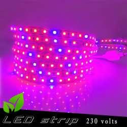 Strip LED Horticole 230 volts - LED rouge et bleue ratio 5 / 1