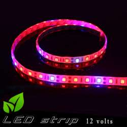 Strip LED horticole 12 volts -IP65 avec LED rouge et bleue ratio 3 / 1 -rouleau de 5 mètres