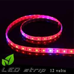 Strip LED horticole 12 volts -IP65 avec LED rouge et bleue ratio 5 / 1 -rouleau de 5 mètres
